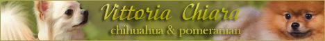 Vittoria Chiara питомник чихуахуа и померанских шпицев